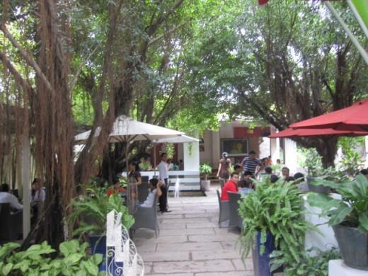 Quán cafe có không gian yên tĩnh và khung cảnh xanh mát