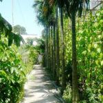 Mười tám thôn vườn trầu