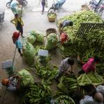 Chợ bắp ngã ba Bầu – Chợ bắp lớn nhất Sài Gòn