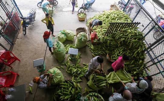 Chợ bắp ngã ba Bầu - Chợ bắp lớn nhất Sài Gòn