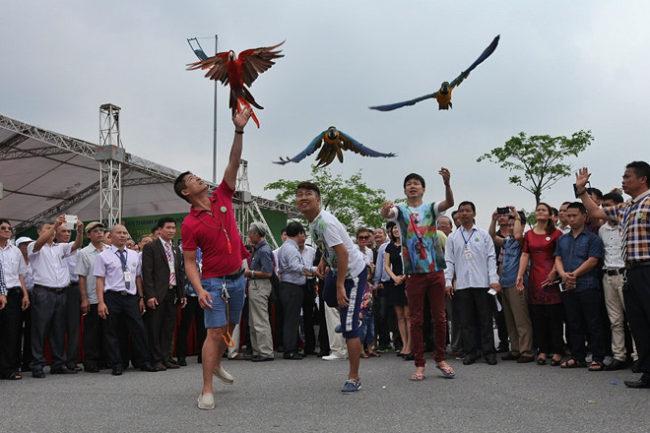 Lễ hội Sinh vật cảnh tại Hóc Môn