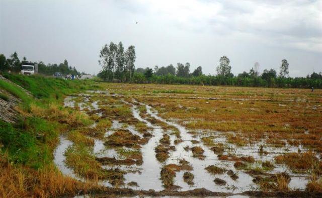 Diện tích tối thiểu tách thửa đối với đất nông nghiệp