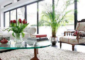 Bày trí cây cảnh hợp phong thủy cho phòng khách