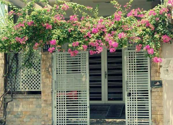 Không nên trồng cây che trước cửa nhà