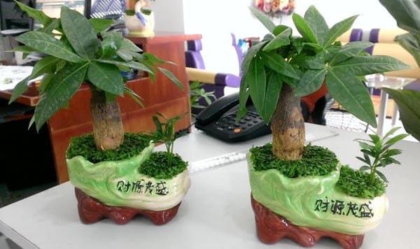 Chọn cây phù hợp với công việc sẽ thúc đẩy sự nghiệp